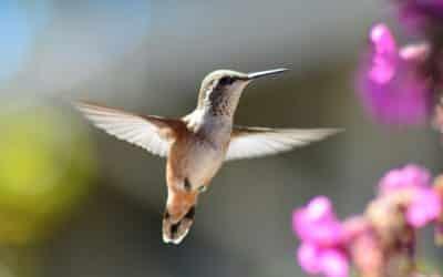Les oiseaux Oraison en Provence