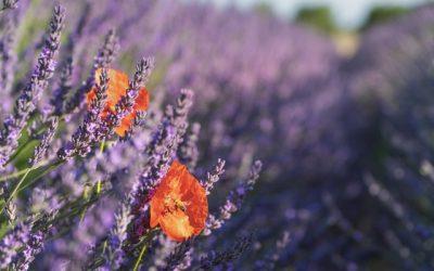 Sentiers botaniques Oraison en Provence